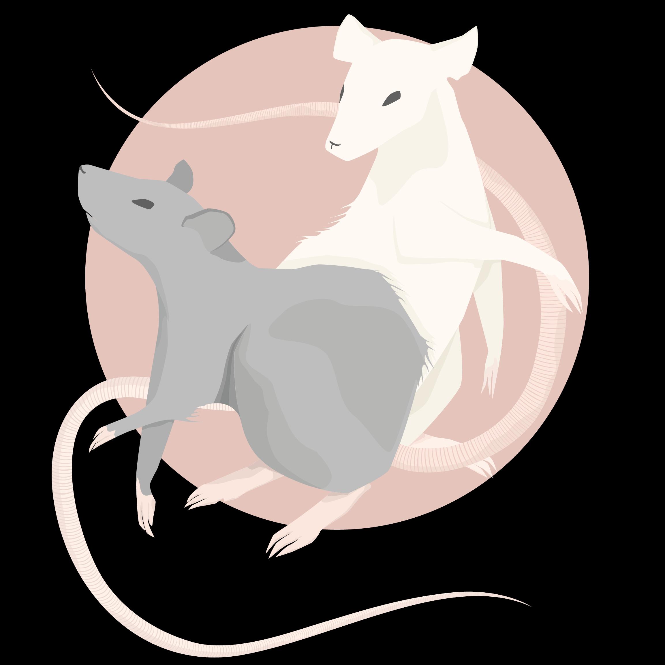 Petit Rat
